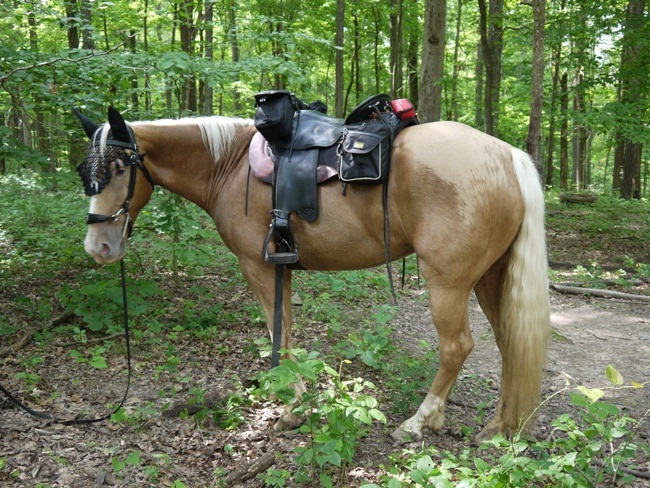 Camping & Trail Riding In Mammoth Caves, KY